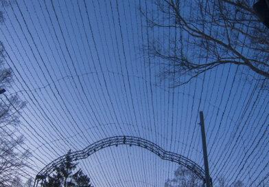 Сахалинская область: подростковая преступность девяностых и проблемы следствия