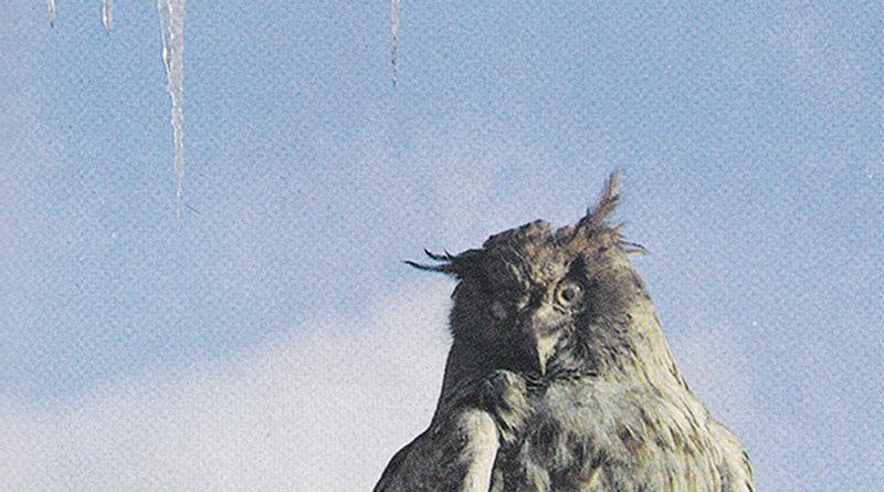 Старые фото Сахалина и Курил. «Южно-Сахалинск. Город и его жители», 1982 г.