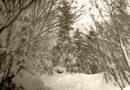 Про правило третей, ровный горизонт и деревья из головы